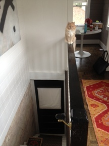 Kitty 'Living on the edge'
